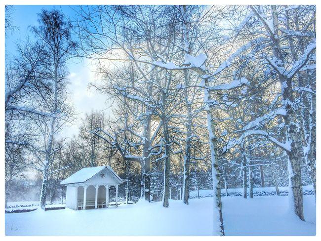Gottesacker Königsfeld Gottesacker Gottesacker Königsfeld Königsfeld Winter Wintertime Snow Snow Day Wonderful Winter Baden-Württemberg  Germany Herrenhuter Brüdergemeine Friedhof Cimitery