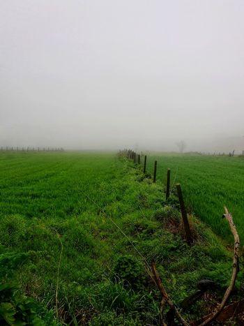 Rural Scene Tree Fog Agriculture Tea Crop Field Sky Grass Landscape Green Color