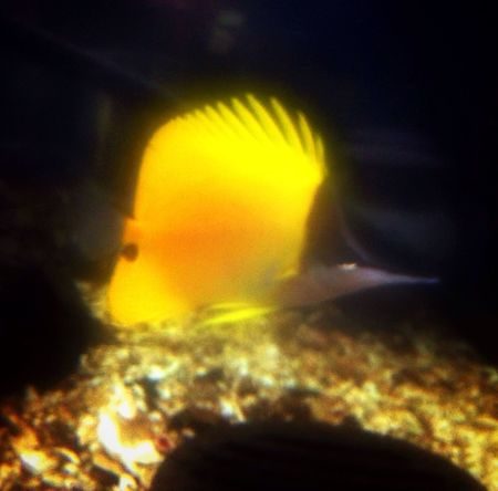 Fish Animals Vacations Check This Out