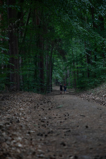 People walking on dirt road amidst trees in forest
