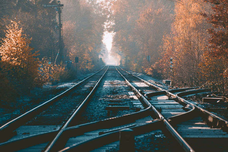Diminishing perspective of railroad tracks amidst trees in forest during autumn