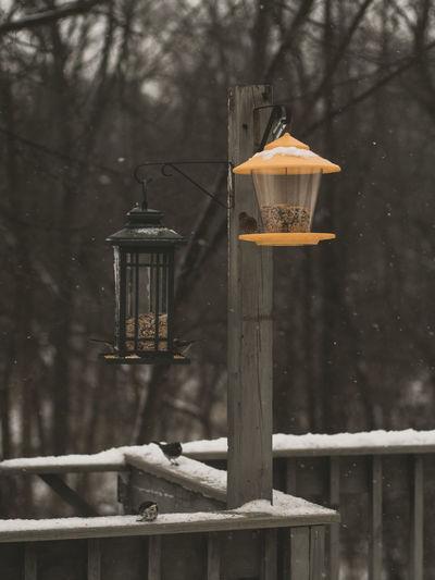 Close-up of lantern hanging on tree during winter
