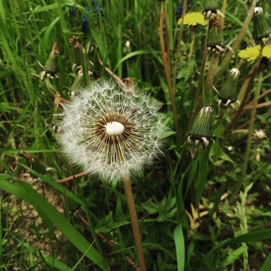 Žádná bolest se nesnáší hůř než vzpomínky na štěstí v době neštěstí. Flower Nice Windy Dandelion Beatuful Grass Speck Like4like Likefor Followme Dayoftheearth Earthday Today