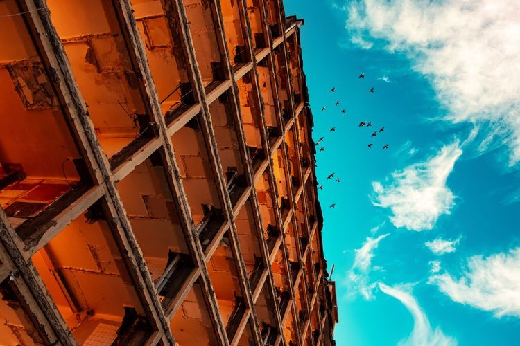 Überflug ... Urban Perspectives Street Photography Cloud - Sky Built Structure Sky Architecture Low Angle View Building Exterior No People Day Blue Building Outdoors City Bird Sunlight Flying Residential District History Apartment Directly Below Construction Site Abandoned Ruined My Best Photo The Architect - 2019 EyeEm Awards