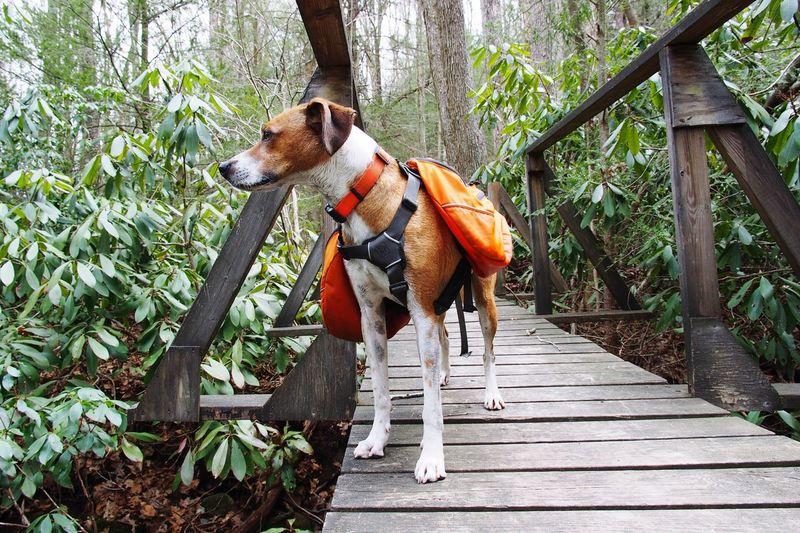 Bridge - Man Made Structure Dog Pack Dog EyeEm Selects Animal Themes Animal Plant Mammal One Animal Tree Outdoors Nature
