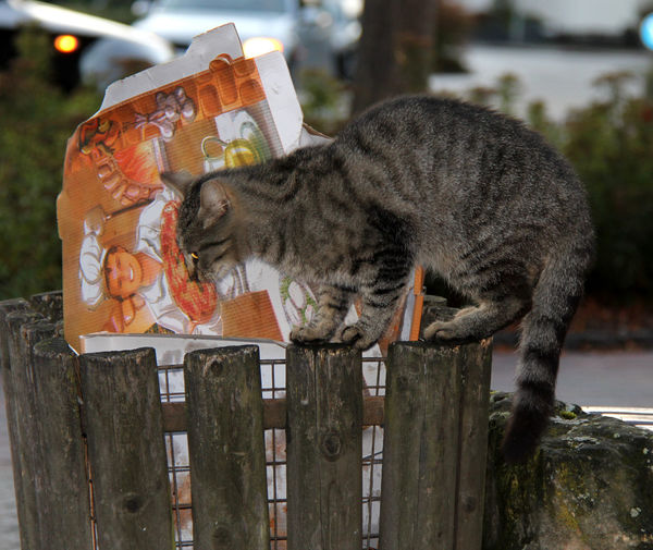 Animal Animal Themes Cat City Day Domestic Animals Domestic Cat Müllleimer No People One Animal Outdoors Pets Stray Cat Streetphotography