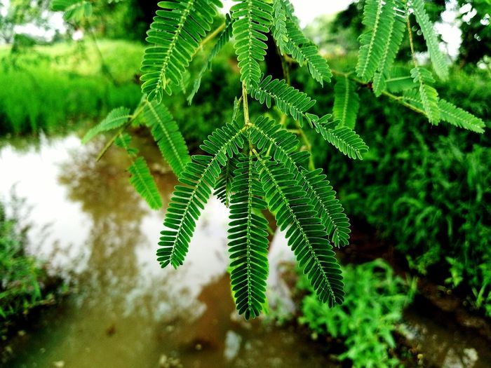 Go Green safe earth.. Green Color Nature Beauty In Nature No People Tree Leaf Day Plant Part Close-up Plant Water Land Nature Meizu M5 Tree Meizu Mobile Photography Mobile Phone Photography Plant Beauty Of Nature