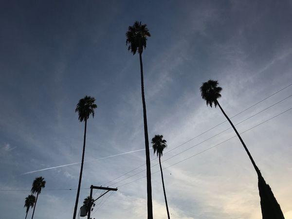 Intersections Palm Tree Low Angle View Sky Silhouette Tree Cable Cloud - Sky
