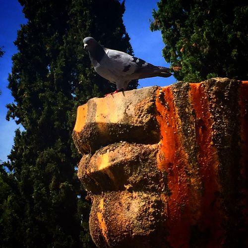 Animal Themes Animals In The Wild Bird One Animal Animal Wildlife Tree Perching No People Day Nature Outdoors Low Angle View Sky Tivoli Tivoli Garden Tivoli #italy #rome #havingFun #friends