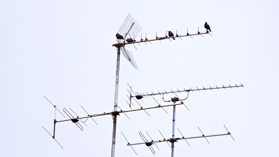 Low angle view of birds perching on antenna against clear sky