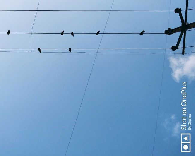 Flight #oneplus Lines Silouette & Sky Bird Blue Cable Clear Sky Day Electricity  Hanging Low Angle View No People Oneplusfive Outdoors Parallel Lines Pigeons Sillouette Sky Telephone Line