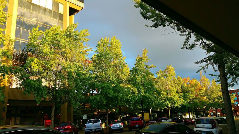 Greenery Trees The Leaves Change Colors Autumn Is Coming Shopping ♡ Downtown Salem, Oregon Mall Beautiful Nature Beautiful Day