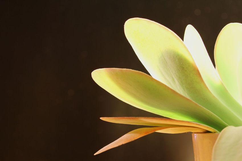 Succulents, Cacti, Flowers, Cicek, Plants, Agaclar, Macros,#closeups, Instagram, Photos, Photographers, Photography, Likeforlike, Like4like, Canon,  7d, Wonderful,#amazing, Awesome, Shot, Shots, Arts Art, Macro_collection Closeupshots Macro Photography Like Close Up Photography Plants And Flowers Close-up EyeEmNewHere Cactus