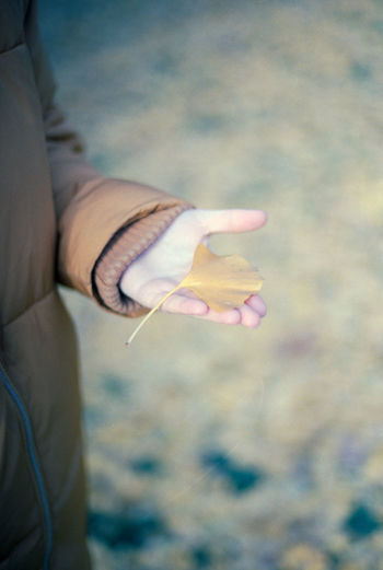 Close-up of woman holding yellow ginkgo leaf