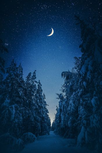 Scenic view of trees against sky at night during winter