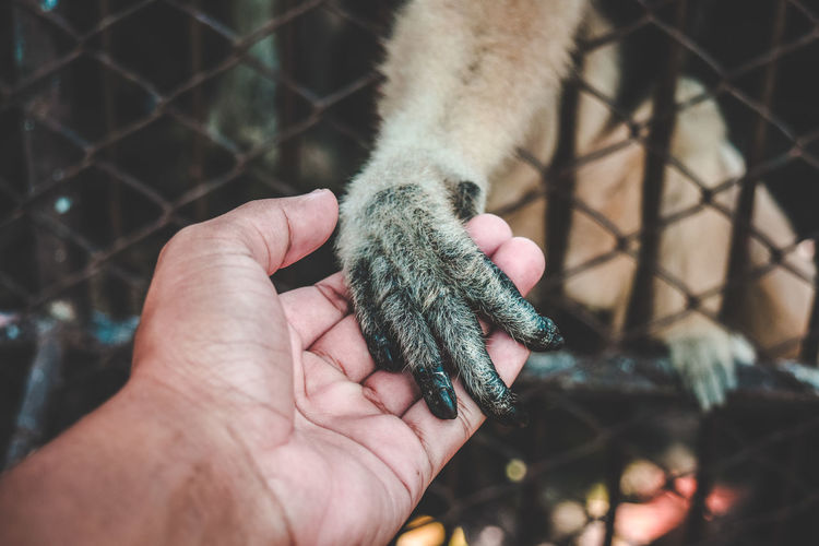 Don't go away. Monkey Nikond5300 Nikon Amity Animal Animal Themes Animal Wildlife Care Docile Domesticated Animal Finger Friendly Animals Friendship Hand Holding Human Finger Human Hand Mammal One Animal Stray Unrecognizable Person Vertebrate
