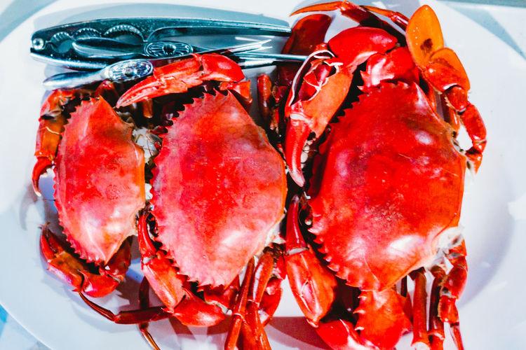 Red crab. Krabi