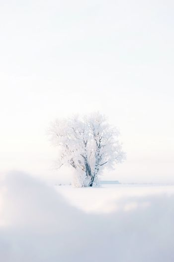 Winter Cold Temperature Snow Tree Beauty In Nature Nature Copy Space Plant Sky No People Scenics - Nature Tranquility Tranquil Scene Deep Snow White Color Day Land Clear Sky Field Snowing