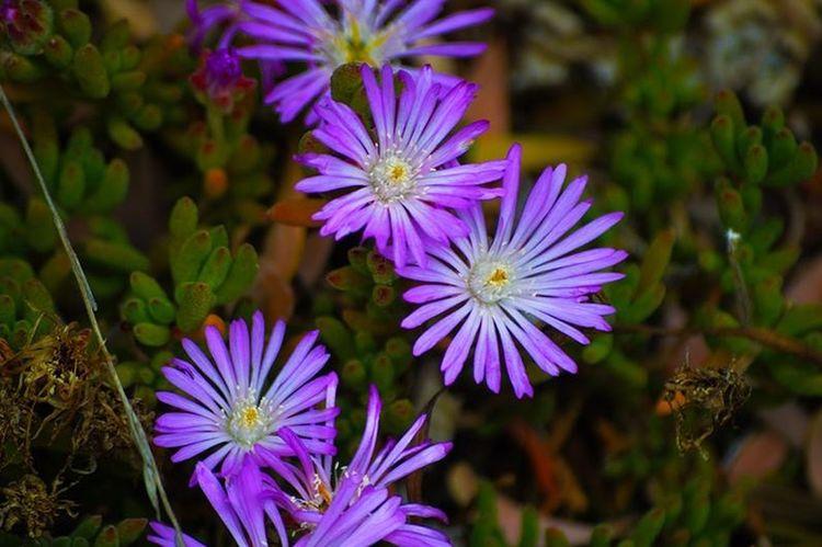 Flowering Plant Flower Plant Freshness Growth Vulnerability  Fragility