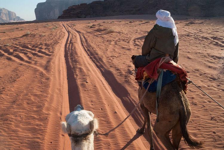 Rear view of man sitting on camel at desert