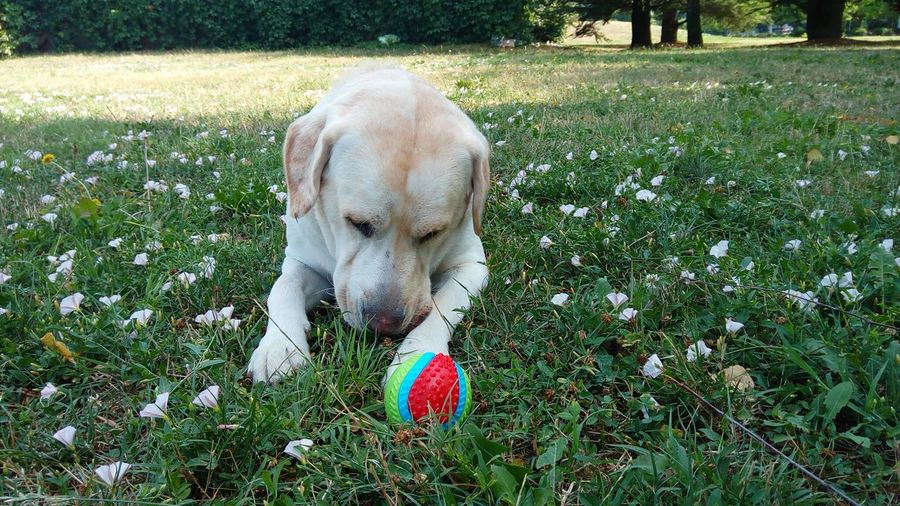 Dog Grass Day