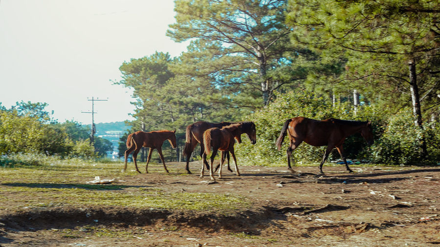 Horses grazing on field against trees