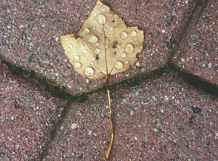 Fall Beauty The Beauty Of Fall EyeEm New Jersey Nature Earth Raindrops Leaf Autumn Leaves Fall Leaves Angles Lines Corners