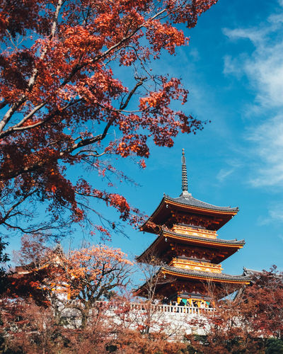 Beautiful Japan Architecture Built Structure Religion Tree Sky Belief Plant Place Of Worship Spirituality Building Exterior Nature Building Low Angle View No People Autumn Change Cloud - Sky Pagoda Day Outdoors Cherry Blossom Cherry Tree Shrine It's About The Journey