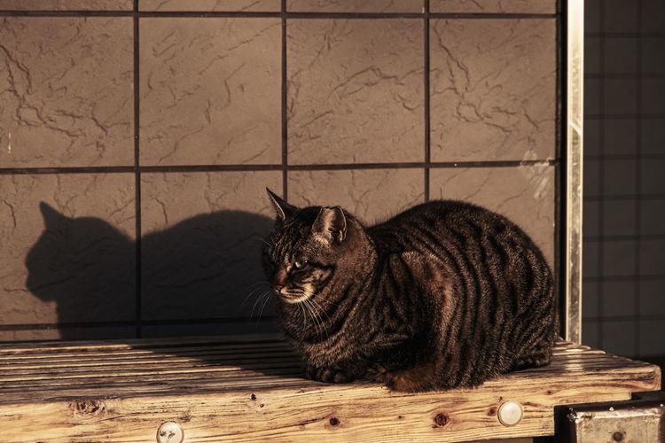 Cat sitting on a floor