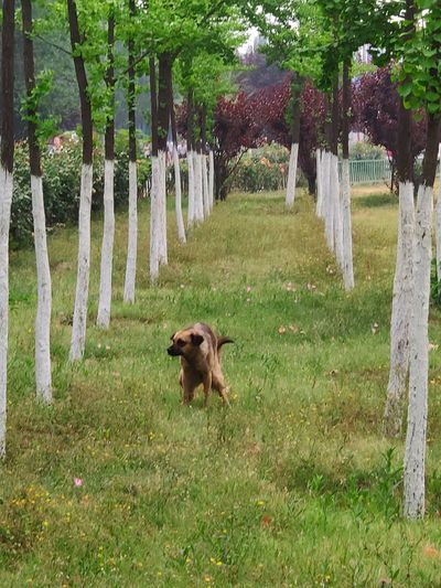 Pets Dog Tree