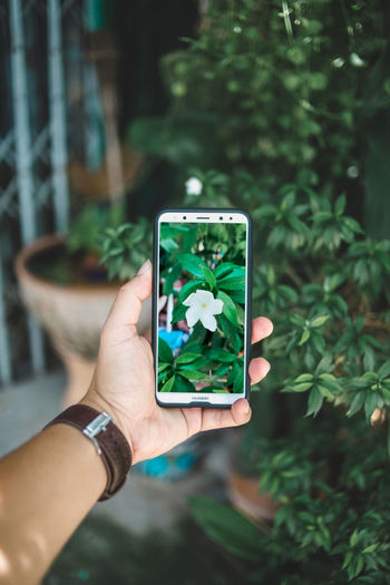 Cropped hand of woman photographing plants through mobile phone
