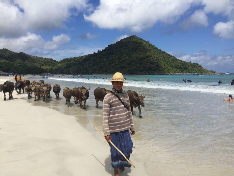 Buffaloes. Selong Belanak. INDONESIA Indonesia_photography Lombok Lombok-Indonesia Selong Belanak, Lombok Selongbelanak Buffaloes EyEmNewHere IPhoneography IPhone