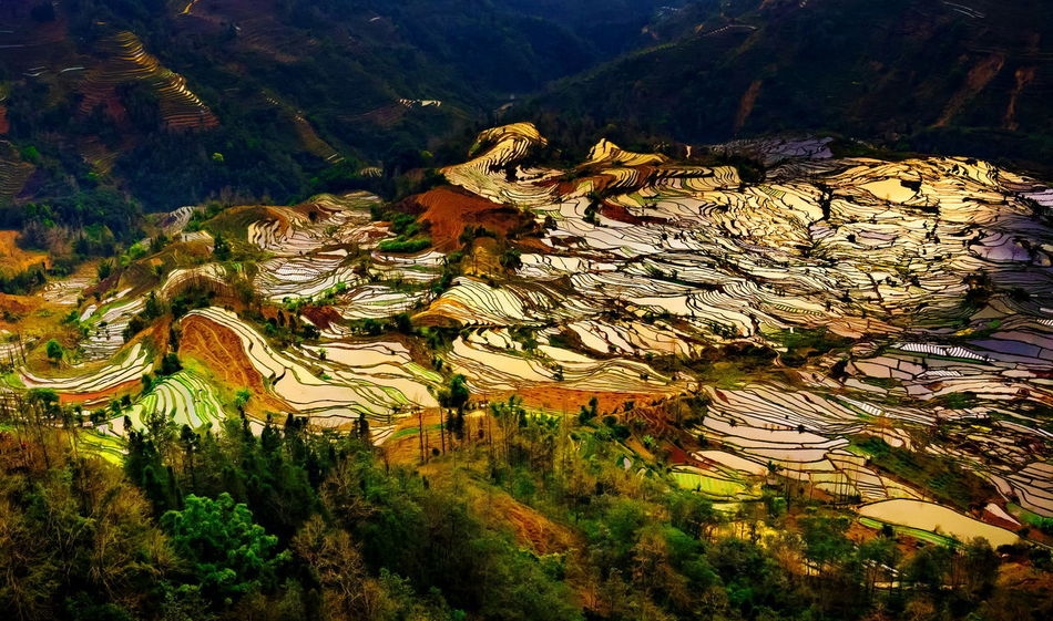 Terraced rice fields in Laohuzui Yuanyang County Laohuzui Nature Rice Paddy Sunlight Yuanyang Terraced Fields Abstract Beauty In Nature Day Growth Landscape Mountain Mountain Range Nature No People Outdoors Plant Rice - Cereal Plant Rice Field Rice Terrace Rice Texture Scenics Sunset Tranquility Tree Yuanyang