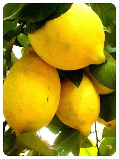 Lemons Fruit Lemon Lemons
