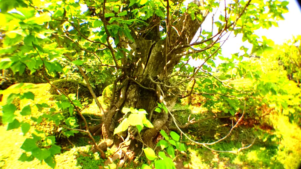 summer! Power In Nature Tree Branch Nature Outdoors Green Color Growth Day No People Tree Trunk Leaf Sunlight Forest Beauty In Nature Shinjuku-gyoen Tokyo,Japan