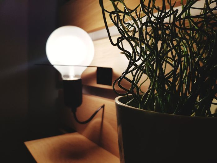 Electric Lamp Lighting Equipment Home Interior Side Table Indoors  Home Showcase Interior Illuminated Vase Luxury Electricity  Table Plant Light Bulb No People Lamp Shade  Living Room Hanging Furniture Close-up Flower Light Up Your Life Light In The Darkness Lights Light And Shadow Lamp Design