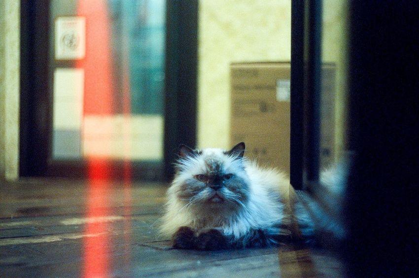 Cinestill Film Photography Filmphotography Shootfilm Film Camera Light Leak Lightleak Filmphoto Cats Of EyeEm