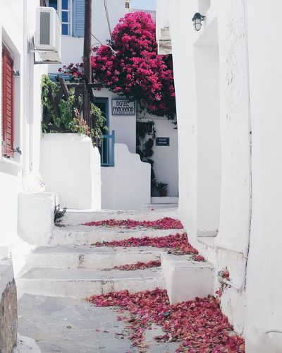 Naxos island. Greece Tropical Paradise Nature Nature_collection Nature Photography Summer Summertime Naxos Greece Island Greek Islands Greece White House Flowers White House Landscape Postcard Blue Graphic Whitewashed Door Architecture Building Exterior Close-up Blooming Flower Head Petal In Bloom Pink