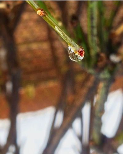 Singledrop Water Blurredout Focus Blurredout Vibrant Saturation Mother Earth Rainy Days Beauty In Nature
