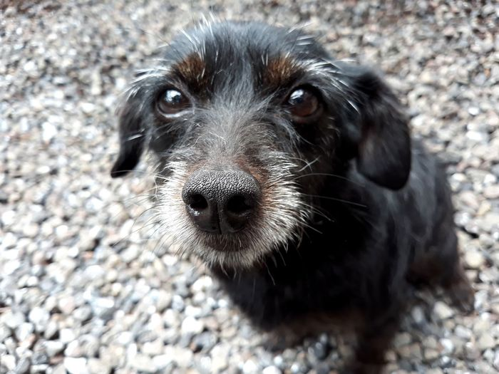 Cachorro Dog Cute Pedras EyeEm Selects Pets Portrait Dog Looking At Camera Black Color Close-up