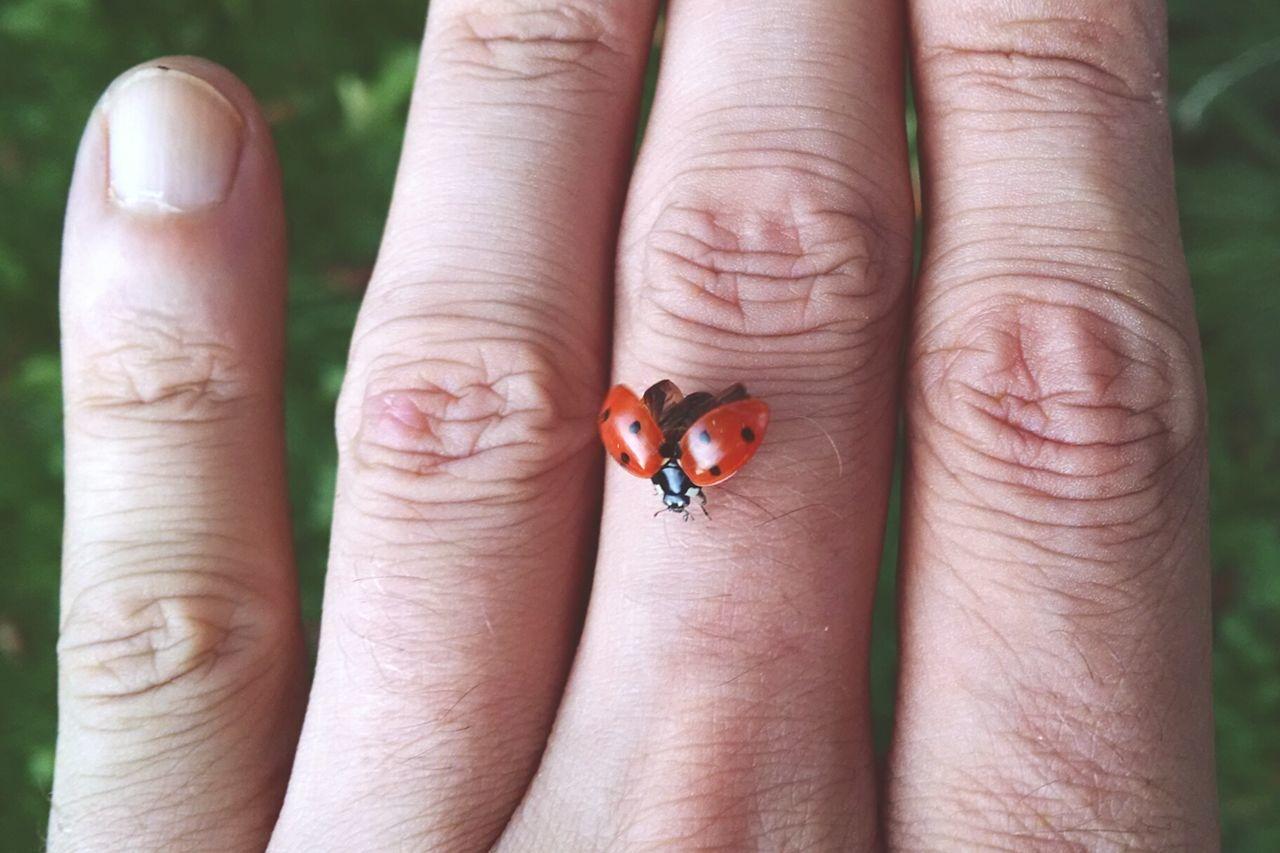 Close-up of ladybug on cropped hand