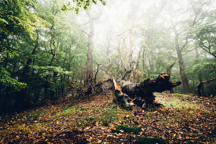 Animal Animal Themes Day Domestic Domestic Animals Forest Forest Photography Growth Herbivorous Land Mammal Nature No People Outdoors Pets Plant Tranquil Scene Tranquility Tree Trunk Vertebrate Wald Waldlandschaft WoodLand