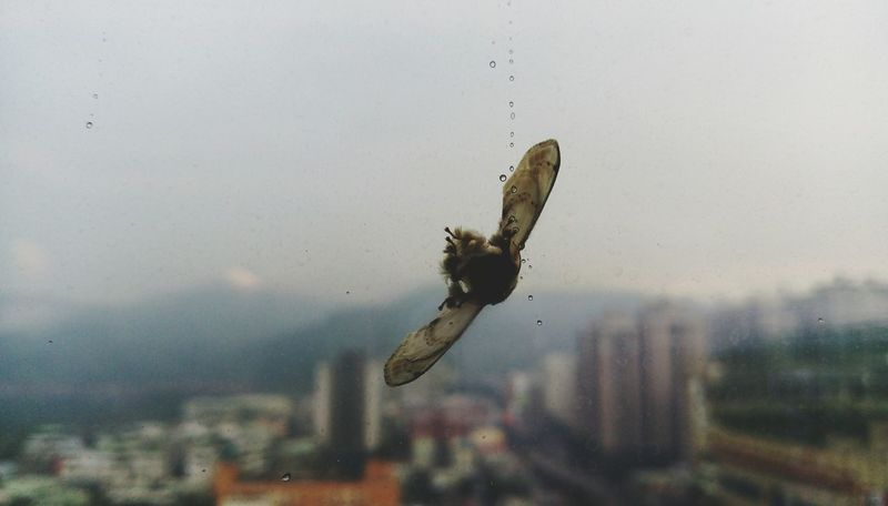 Getting Inspired Hitting Creatures Glass Objects  Tears Rainy Day Rain Drops On A Break Top Secret Mission Dead Nature Urban Nature City Life Surface Mount Cityscapes Telling Stories Differently Showing Imperfection