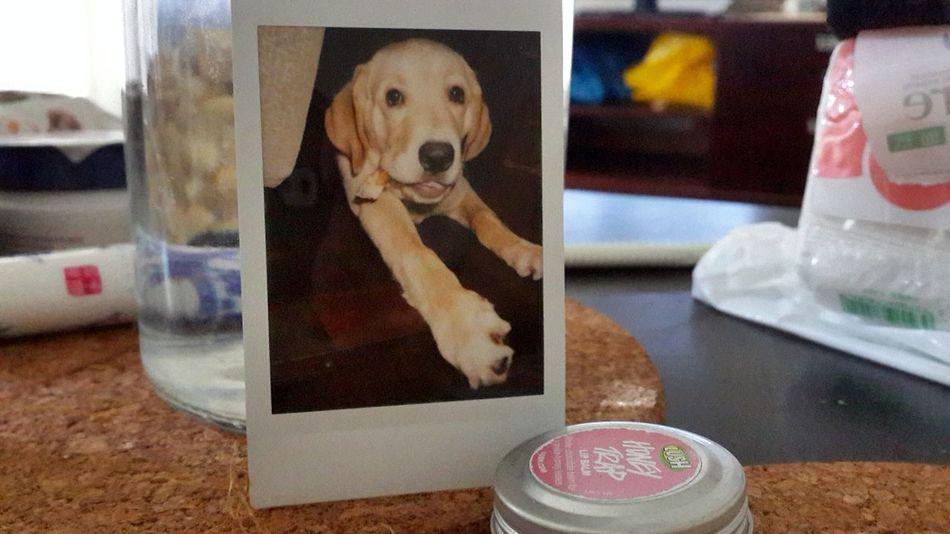 Taking Photos Photography Dog Poloroid