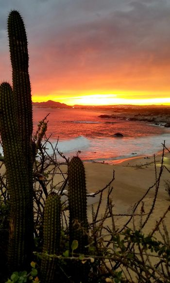 Sunset Sky Water Scenics - Nature Beauty In Nature Cactus Sea Succulent Plant Nature Plant Orange Color Tranquility No People Tranquil Scene Growth Cloud - Sky Land Beach Outdoors