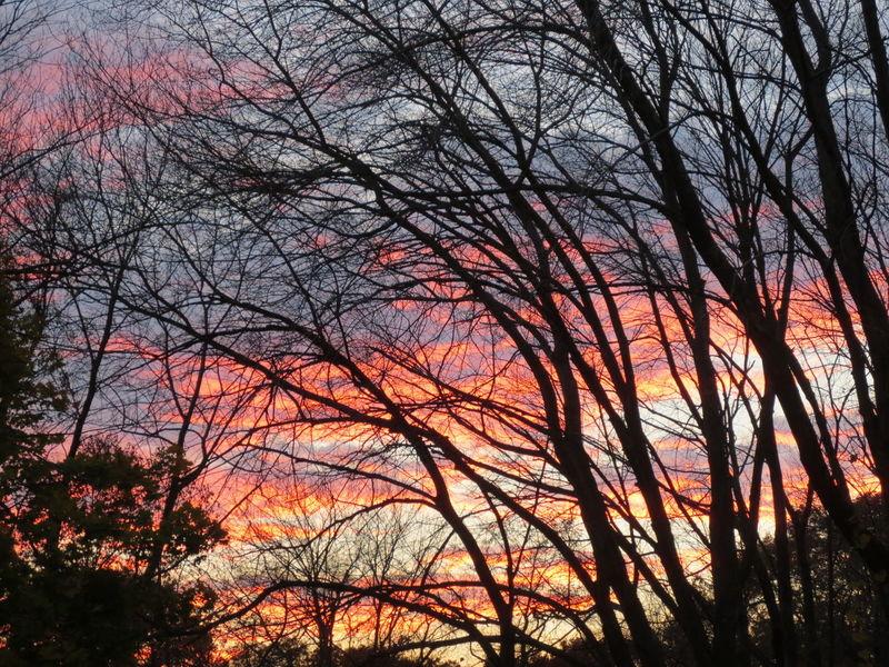 Beautiful Sunset Winter Sunset Winter Skies Trees Winter TreesbeautifulColorful Sky Multi Colored Beautiful Sky