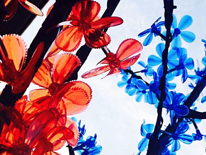 Flowers. Plastic Flower Plastic Plasticfantastic Red And Blue Colour Of Life