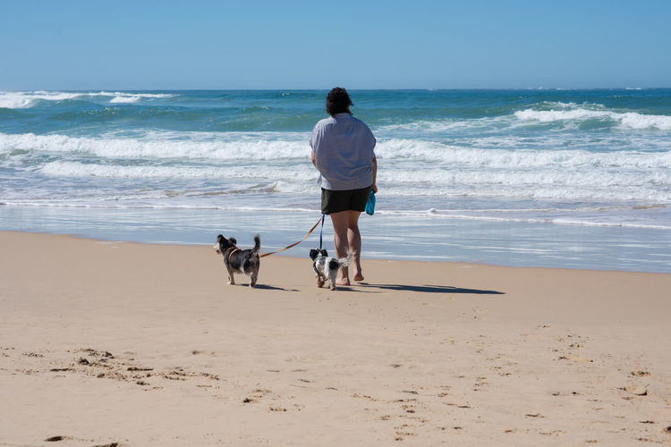 Rear view of two dogs on beach