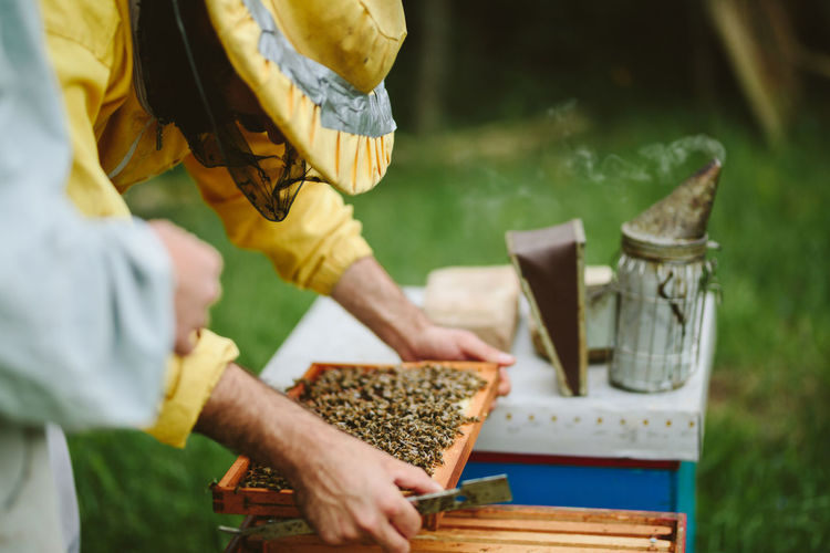 Beekeeper holding beehive tray at farm