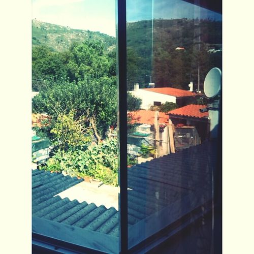 Urban Reflections Relaxing Home Sweet Home ♥ Urban Nature House Window Reflexions Landscape Two Views Indoors  Outdoors Rural Vs Nature Spring Green Flower Sun Colors Orange Grey